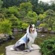 天神山緑地をお散歩~
