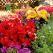 カラフルな花壇