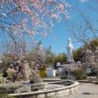 葉桜・・・