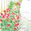 ●月・水・金発信/「マツタケご飯」