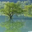 白川湖 (山形県飯豊町)