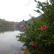 ☆天草の紅葉:湖畔の散歩