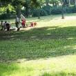 武蔵野公園も秋の訪れです その3