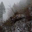 雪の鷹取山で隠れた能力を開花させるヤツ。