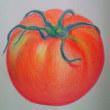 色鉛筆の トマト誕生 寒波の朝 寒い部屋だね 朝陽になるよ!と