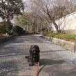 お散歩日和でした