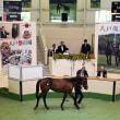 【八戸市場2018(Hachinohe Sale)】の「上場馬名簿」が発行!