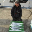 釣られる青物、太刀魚、タコは災難