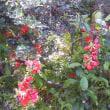 実家の庭の春