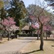 奈良公園の梅林