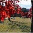 「もみじ平総合公園」 の紅葉(2) (群馬県富岡市)