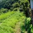 挑戦田舎暮らし 下段の草刈りが完了しました!