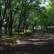 晴天に恵まれた荒子川公園