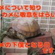World Turtle Day !