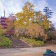 2017.11.12 松戸市 本土寺: 五重塔の周りの紅葉