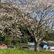暖かい春の陽気