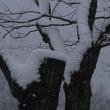 春でも雪は降るのに季節外れとはこれ如何に
