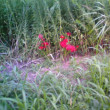淀川土手で見つけた彼岸花で一句