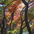 2017-11-21 今日の記録  桜が丘公園散策