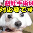 去勢、 避妊手術は絶対必要です!Contraception of dogs need