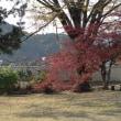秋月紅葉散歩