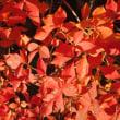 別所沼公園の紅葉