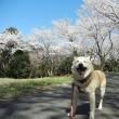 愛犬まるの月命日1+2