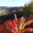 第2469回 Indian summer in Luxembourg City 2017-2