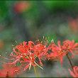 最近に成り、自宅や道端で季節外れの花が咲いているのに気が付いて・・・