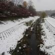 野川と武蔵野公園の雪