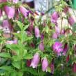庭の花 (ちょっと前の)