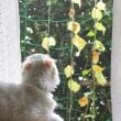 休日雑談:安穏の窓