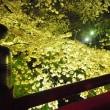 埼玉県深谷市 瀧宮神社 夜桜  +本庄若泉公園