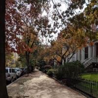 ワシントンDCの秋