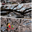近所周辺の桜