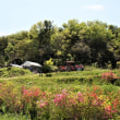 4月29日(日)天然酵母の竹パンランチ&よもぎモチ作り