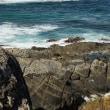 カンガルー島(オーストラリア)