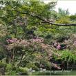 簾越しに見る夏の風景  (京都御苑・拾翠亭)