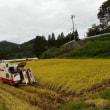 今年は天候に恵まれず、稲刈り大変です!昨日も、今日も、1枚刈って2枚目で雨に降られ、ずぶ濡れ!当分晴天が望めないので、1枚ずつでも刈り取るしかないのだろう・・・