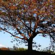 『大磯富士』 花水川岸