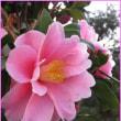 寒さに名残りを惜しむ「花」