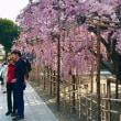 京都・サクラ・フォト・番外編 ~ 仏光寺にも外国人観光客 !