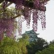 名城公園 百花繚乱