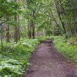野幌森林公園・中央線を歩く