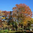急に寒くなった今年は紅葉と黄葉が特別美しい