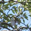 福岡城址の野鳥(4)