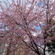 3/22 山本狂言会・名古屋城・天丼