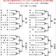 〔大会情報〕第62回中国高校県予選 決勝L