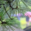 雨の後楽園松葉