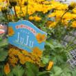 タキイ種苗の展示会
